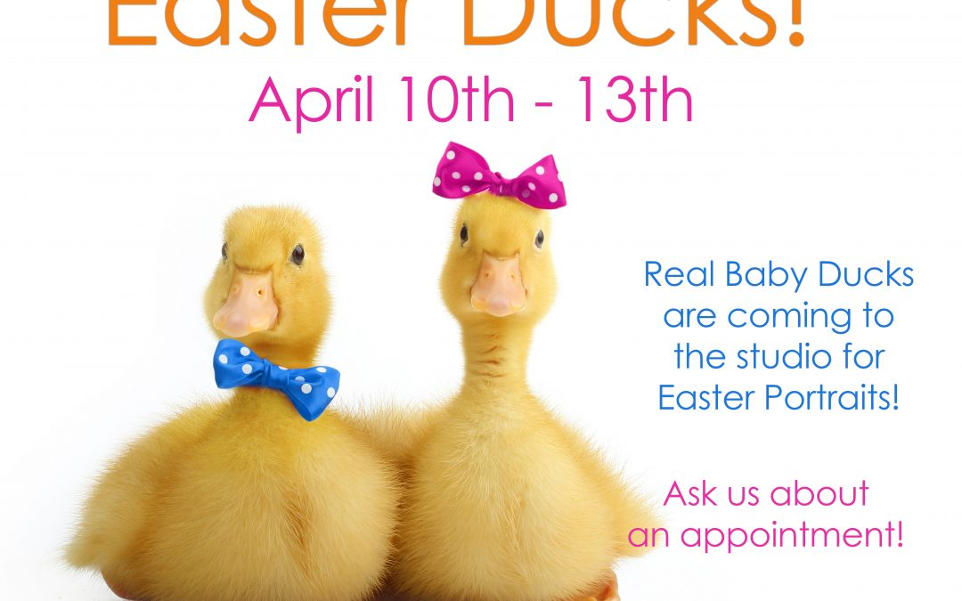 NOW Booking for Easter Duck Sessions